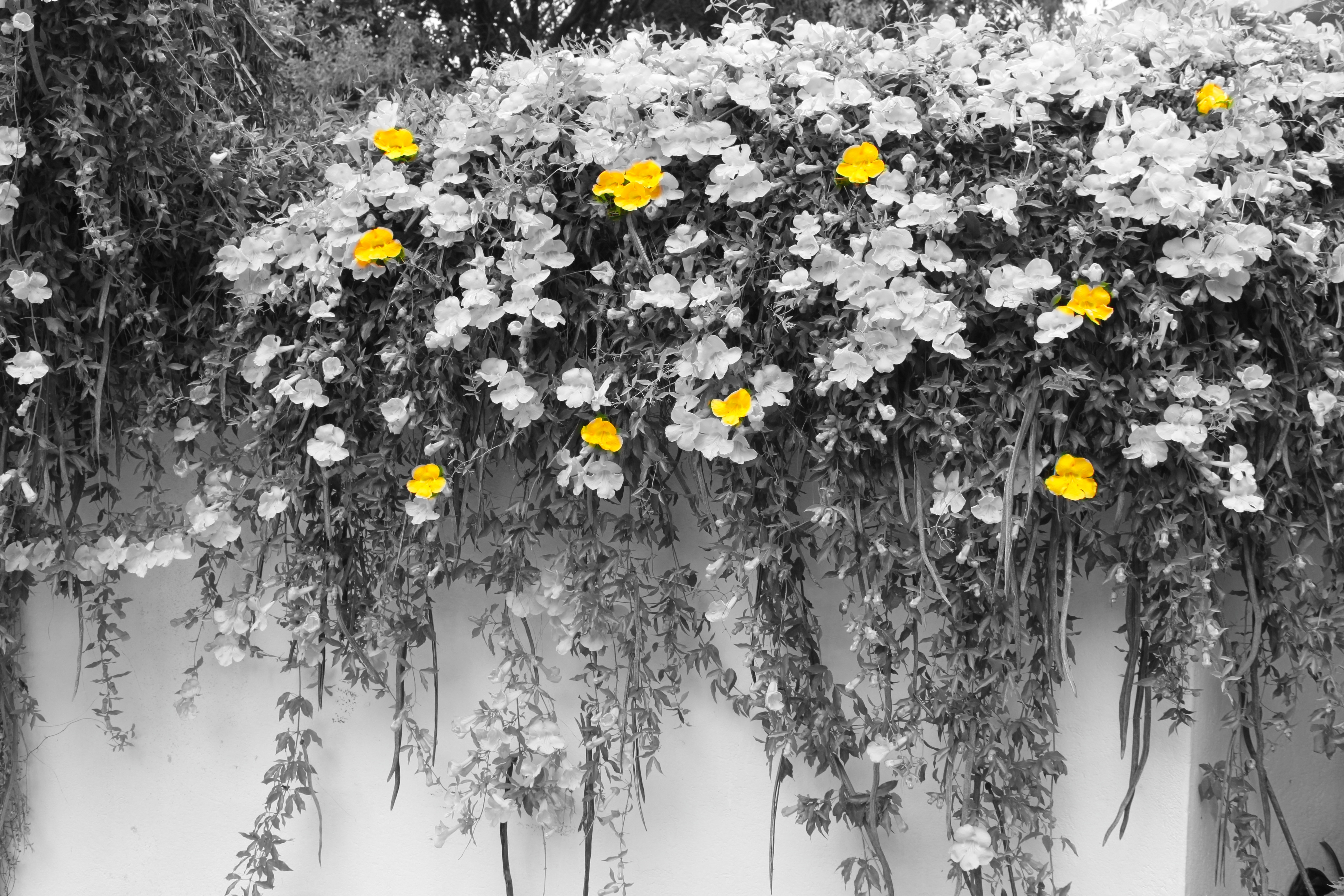 Black And White Photography With Yellow Color Splash Playing with Photos | ...