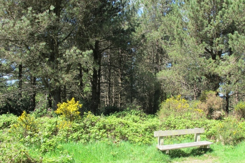 kindlestown wood